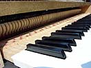 Rhodes Student Piano - Action